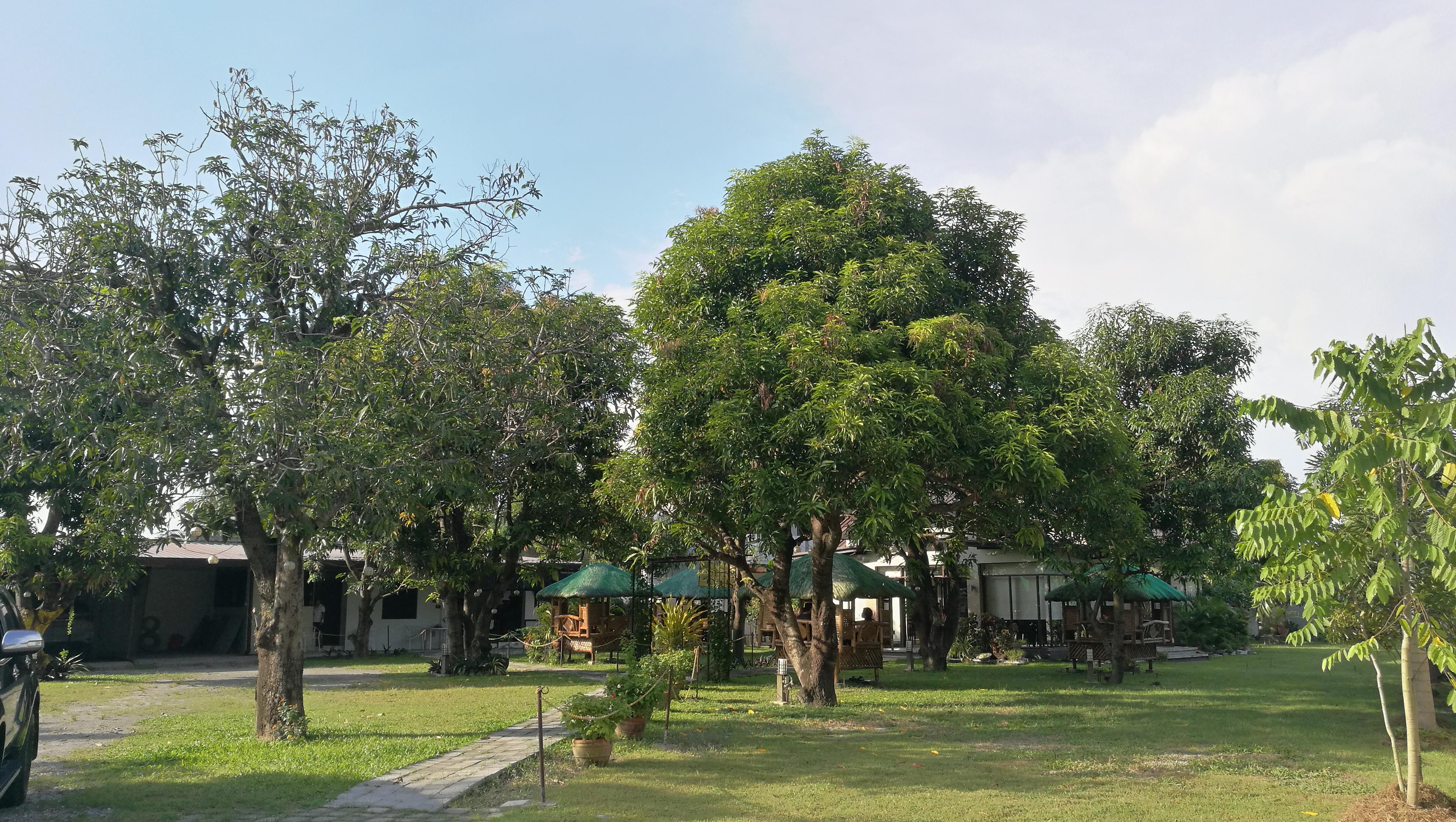 友人塾の開放的な敷地