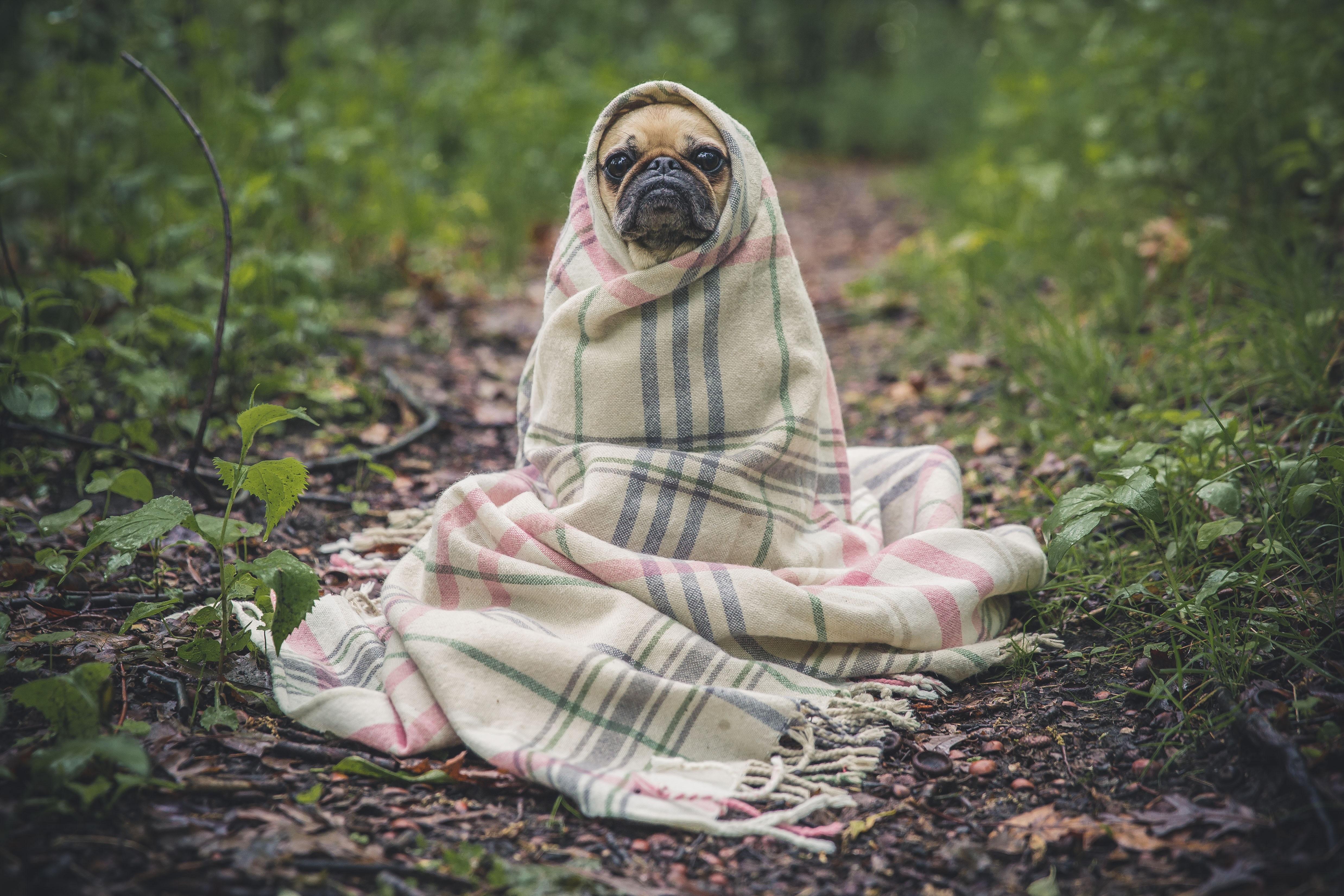 寒い 冷える